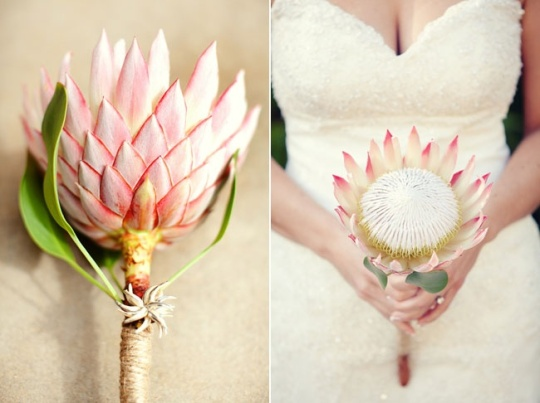 Simple King Protea Bouquet
