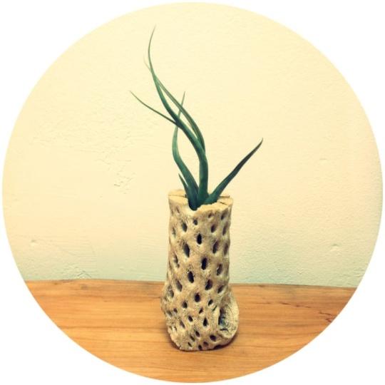 Desert Vase & Cactus